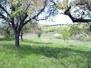 Big plot of agricultural land with potential for development