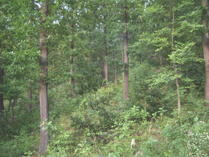 Huge plot of land only 200 m. from Topolovec River, at a very low price!