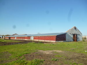 Old farm with spacious plot of land and cattle for sale