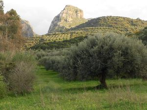 Organic Land for Artisan Olive Oil & Eco-Camping Project.