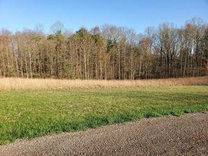 Land, almost 6 Acres, cleared Build Site, Wooded