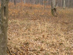 For sale land with forest