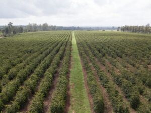 Large Coffee Farm for Sale