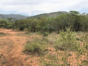 1Ha land for sale in wildlife estate
