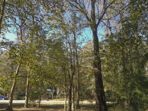 City Escape - 0 Davey Ln Lot 12 Coldspring TX 77331