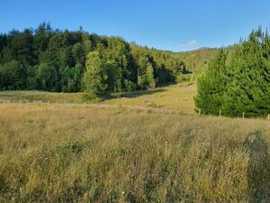 BEAUTIFUL PLOTS OF LAND IN CHILE SURROUNDED BY NATIVE FOREST