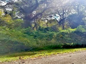2 pristine lots in a Lakeside Community - Montgomery TX 7731