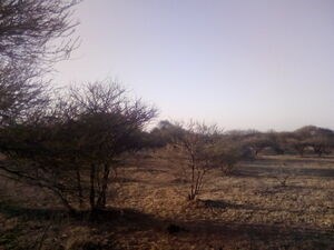15 hectares farm for sale in Rasesa, Botswana along A1 road