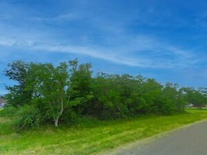Developer Special: 0.92 Acre, Directly On I-10