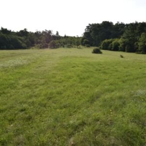 Beautiful agricultural land surrounded near Umag